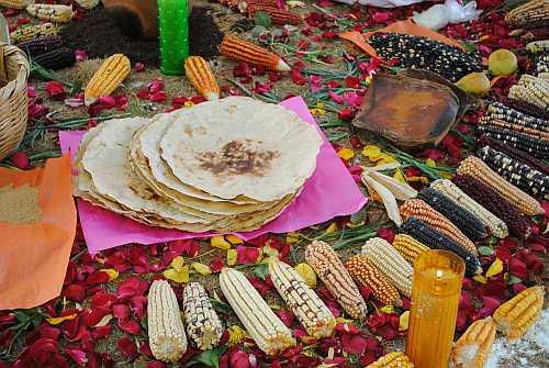 Auch der Anbau einheimischer Maissorten kann die Mexikaner*innen satt machen / Foto: Ceccam