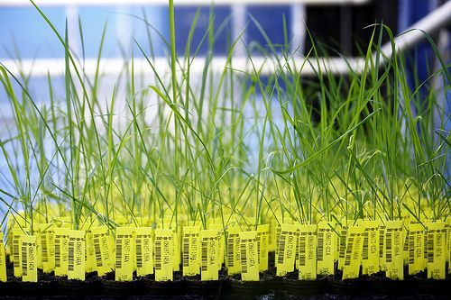 Bilduntertitel von BASF: Crop design - the fine art of gene discovery / BASF - The Chemical Company, CC BY-NC-ND 2.0, flickr