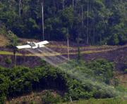 Indigene verhindern Zerstörung von Pflanzungen
