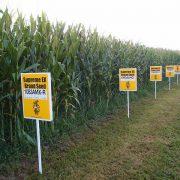 Nobelpreisträger als Diener*innen von Monsanto und Syngenta