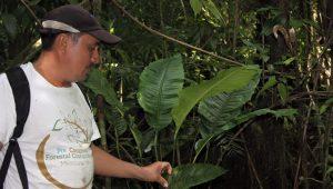Umweltschützer im Petén: Walter Manfredo Méndez Barrios