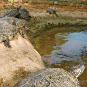 Mazunte: Schildkröten-Schutzzentrum vernachlässigt