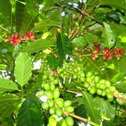 Kaffee aus Kolumbien bei Aroma Zapatista