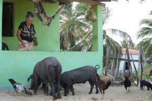 Dörfliche Szene in Caetanos de Cima: Schweine füttern / Foto: Nils Brock, CC BY-SA 4.0