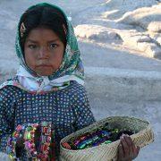 Kriminelle Umweltzerstörung im Nordwesten Mexikos