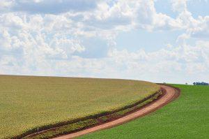 Links des Weges Soja, rechts Mais in Monokultur - soweit das Auge reicht / Foto: Vinícus Serafim, CC BY-NC-ND 2.0