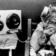cat-radio