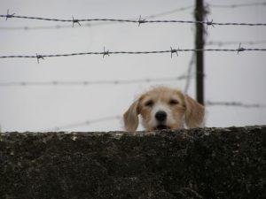 Ein Hund auf Kuba. Die Behörden haben nicht mitgeteilt, ob er in Haft bleibt oder freigelassen wurde. Foto: cubasalitreysal.blogspot.com (CC BY-NC-ND 2.5)