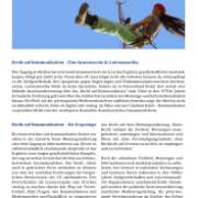 Infoblatt Recht auf Kommunikation