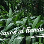 onda-info 407 especial – vom Panamazonischen Sozialforum in Tarapoto!