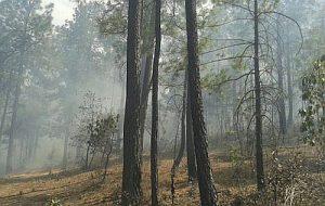 Ein Waldbrand hat schätzungsweise 40 Hektar Wald vernichtet / Foto: Contec