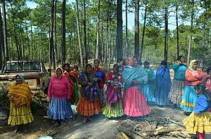Die Rarámuri kämpfen um ihr Territorium und um ihren Wald / Foto: Contec