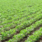 Südamerika: Hunger trotz Kornkammer?