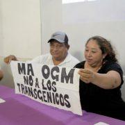 Yucatán: Staatliche Manipulationsversuche bei Befragung zu Gensoja