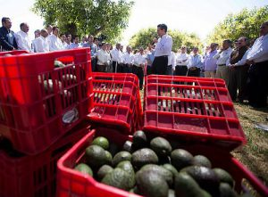 Avocado-Exportprogramm? Ganz wichtig! Da kam 2014 sogar der Präsident vorbei / Foto: Presidencia de República, CC BY 2.0