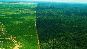 """Die sogenannte """"Frontera Agrícola"""" bei Nueva Requena. Das Foto zeigt die Abholzung in den Gemeinden Bajo Rayal und Curimana im Distrikt Nueva Requena 2013/2014 / Foto: biofuel observatory/vigilancia amazonica"""
