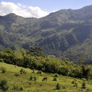 Yeni Navan – selbst verwaltete Kaffee-Produktion in Südmexiko