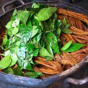 Ayahuasca: Traditionelles Heilmittel und alternativer Drogenentzug im Amazonas