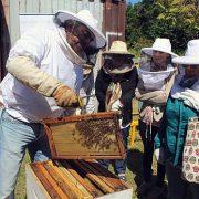Concepción weiht Bienenhaus ein – Kinder sollen für Naturschutz begeistert werden