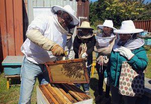 Einen Ort für Bienen: Im Stadtgarten von Concepción gibt es jetzt ein Bienenhaus und Bildungsangebote. / Foto: medio a medio