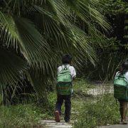 Ölpalmen im mexikanischen Urwald auf dem Vormarsch (Teil 1)