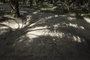 Ölpalmen-Pflanzung im Ejido Boca Chajul, nahe der guatemaltekischen Grenze, im Lacandona-Urwald in Chiapas / Foto: Moysés Zúñiga Santiago, Moncabay/desinformemonos