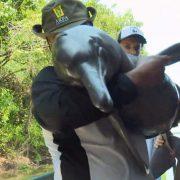 Brasilien, Bolivien und Kolumbien wollen Amazonas-Delfin retten