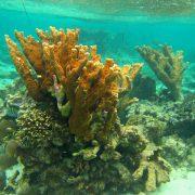 Belize verbietet Erdölförderung zum Schutz seiner Korallenriffe