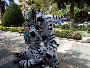 Zebras La Paz
