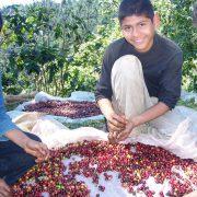 Klimawandel und Folgen für den Kaffeeanbau