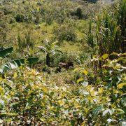 Mexiko: Die Präsidentschaftskandidaten und ihre (fehlenden) Pläne für die Landwirtschaft