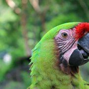 Hidroituango in Bildern – Flora und Fauna