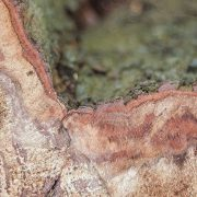 Dem Amazonasgebiet droht die teilweise Versteppung
