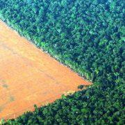 Abholzung im Amazonasgebiet nimmt wieder zu