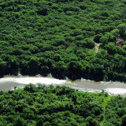 Entwaldung im Gran Chaco: Ein Wald kämpft um sein Überleben