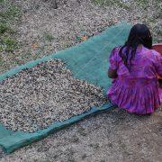 Kaffee-Kooperative im Süden Mexikos