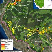 Amazonasgebiet: Jede Minute zwei Hektar Wald abgeholzt
