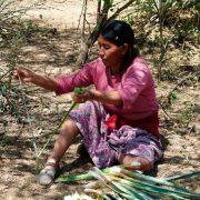 Wichí-Indigene kennen über 400 Heilpflanzen-Anwendungen