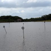 Shrimp-Farmen statt Mangroven