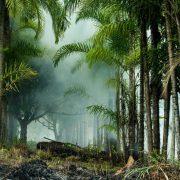 Abholzung im brasilianischen Amazonasgebiet stark angestiegen