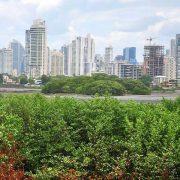 Mangroven-Sterben in Panama