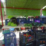 Uruguay: Mehr Gemüse aus Bioanbau?