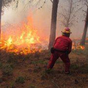 Brände im Süden Ecuadors vernichten über 1300 Hektar Wald