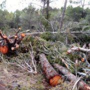 Starke Abholzung auf chilenischer Insel Chiloé