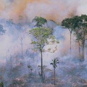 Abholzung im Amazonasgebiet auf höchstem Wert seit zehn Jahren