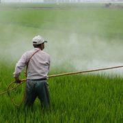 Über die Hälfte der pflanzlichen Lebensmittel mit Agrargiften belastet