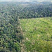 Abholzung im Amazonasgebiet auf höchstem Stand seit fünf Jahren
