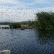 Welttag der Feuchtgebiete: die Ramsar-Gebiete in Peru