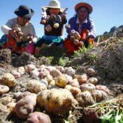 Mit kleinbäuerlicher Landwirtschaft dem Coronavirus trotzen