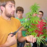 Cannabis, Gesundheit und Drogenhandel